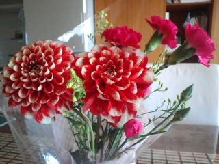 嬉しい赤いダリアのお花!
