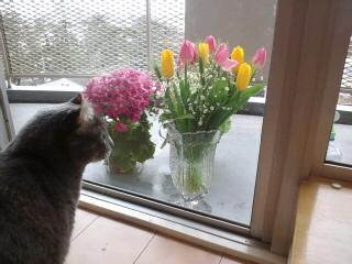 外のお花…(笑)