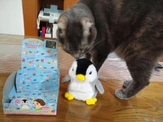 オウム返しする ペンギン(笑)